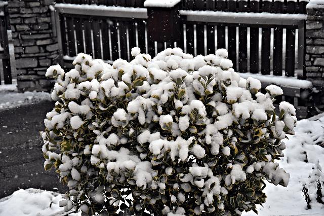 Na zimu se stěhujeme do zimní zahrady