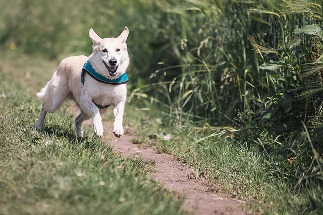 pes na závodech