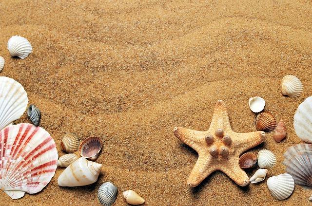 mušličky na písku